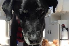 Someone heard food