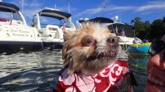 Poppy Swimming